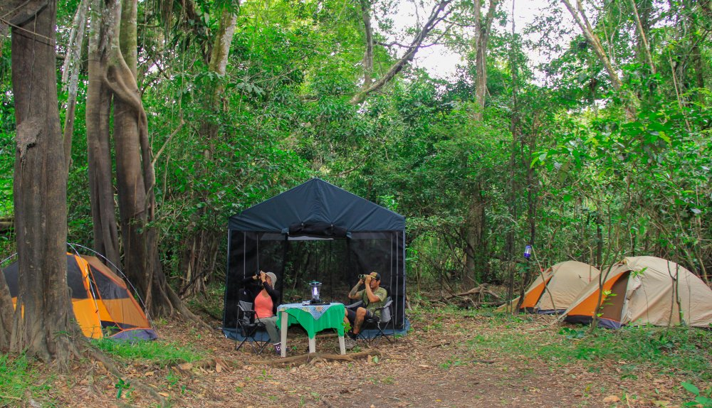 Expedition to the Pacaya Samiria National Reserve 4 days